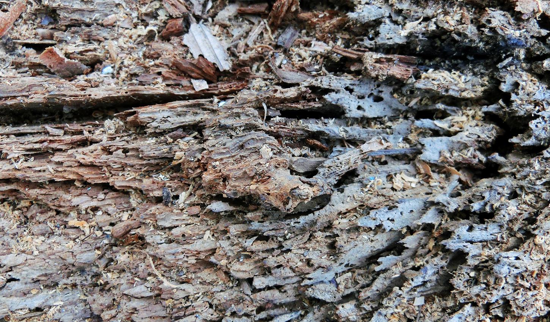 シロアリ被害を受けた木材